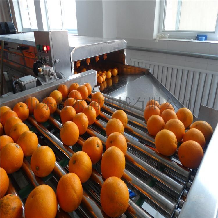 济南 洗橙机 橙子毛辊清洗机 脐橙毛刷气泡清洗机772541332