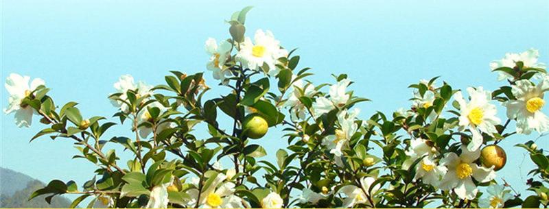 小籽山茶油2L详情0.png