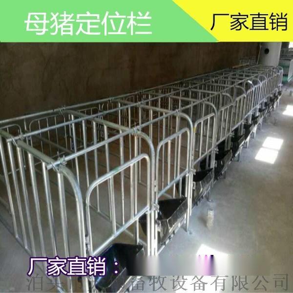 灵宝养殖母猪定位栏 保胎母猪定位栏 镀锌母猪定位栏765001875