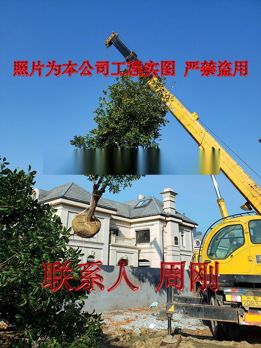 苏州别墅绿化 庭院景观绿化工程 别墅苗木培育基地899698335