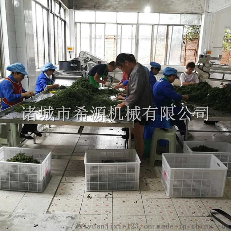 四川鲜花椒加工设备 保鲜花椒清洗杀青生产线825744342