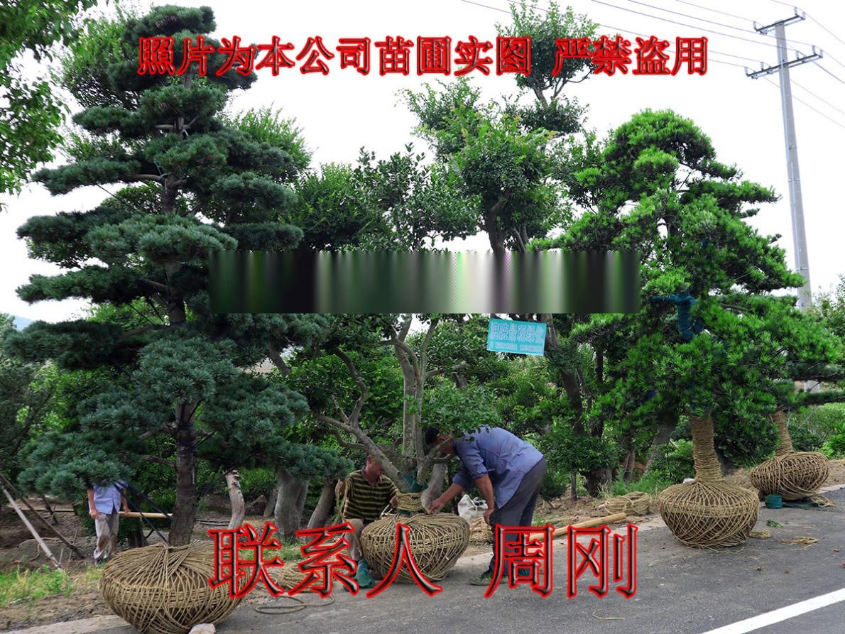 苏州别墅绿化 庭院景观绿化工程 别墅苗木培育基地899698355