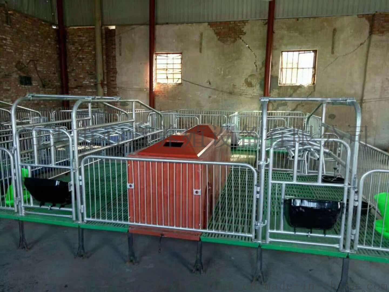 双体母猪产床仔猪欧式床母猪产保一体产床定位栏保育床118499542