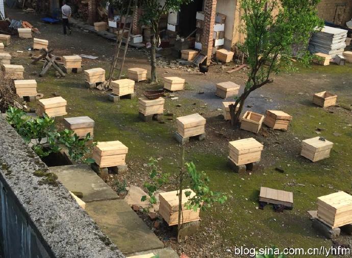 供應蜂種中蜂種羣出售蜂王出售中蜂出售蜂羣110343382