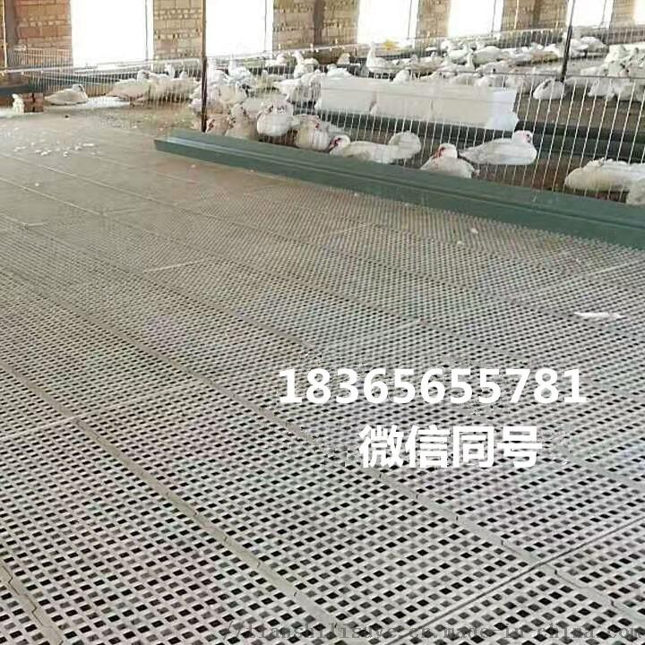 厂家鸡用塑料漏粪板 鸡漏粪床 鸡用漏粪板规格852141182