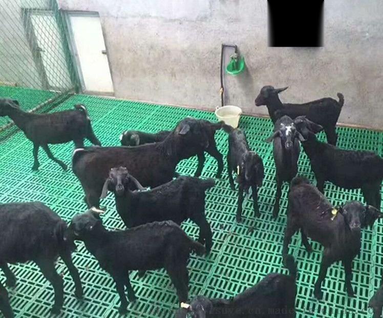 厂家供应羊用漏粪板 山养漏粪板厂家 羊用塑料漏粪板111752672
