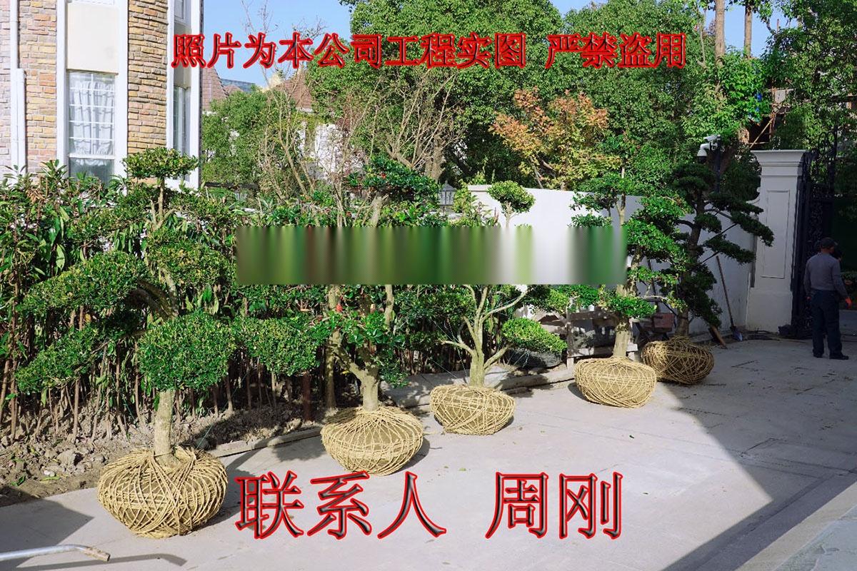 苏州别墅绿化 庭院景观绿化工程 别墅苗木培育基地899698325