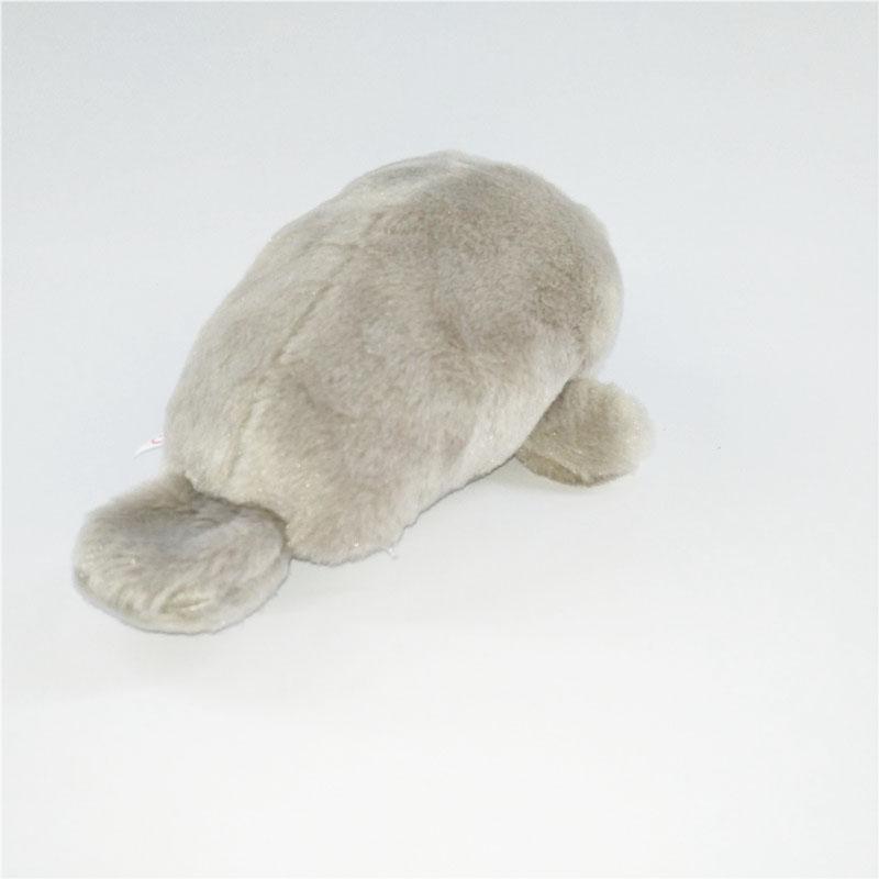 灰色海狮 (4).jpg