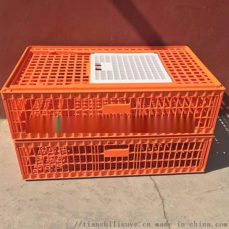 供应成鸡笼子 大鸡笼子 塑料鸡鸭大笼子898022335