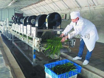 山东 净菜加工生产线 油菜清洗机 连续净菜加工设备767106052