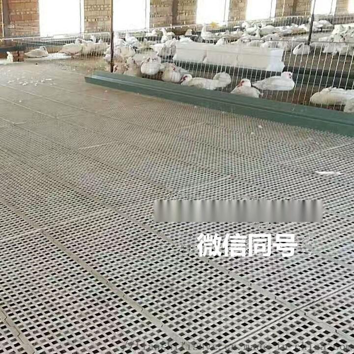 鸡用漏粪板供应厂家 鸡用塑料漏粪板报价837320302