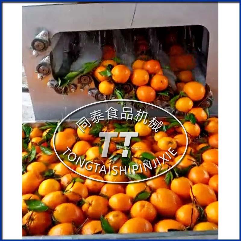 柑橘清洗机.jpg