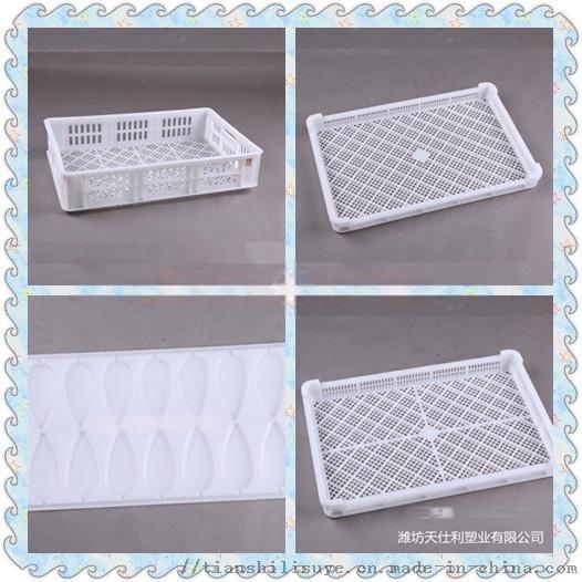 山东供应塑料单冻盘厂家 海鲜冷库用单冻盘112875622