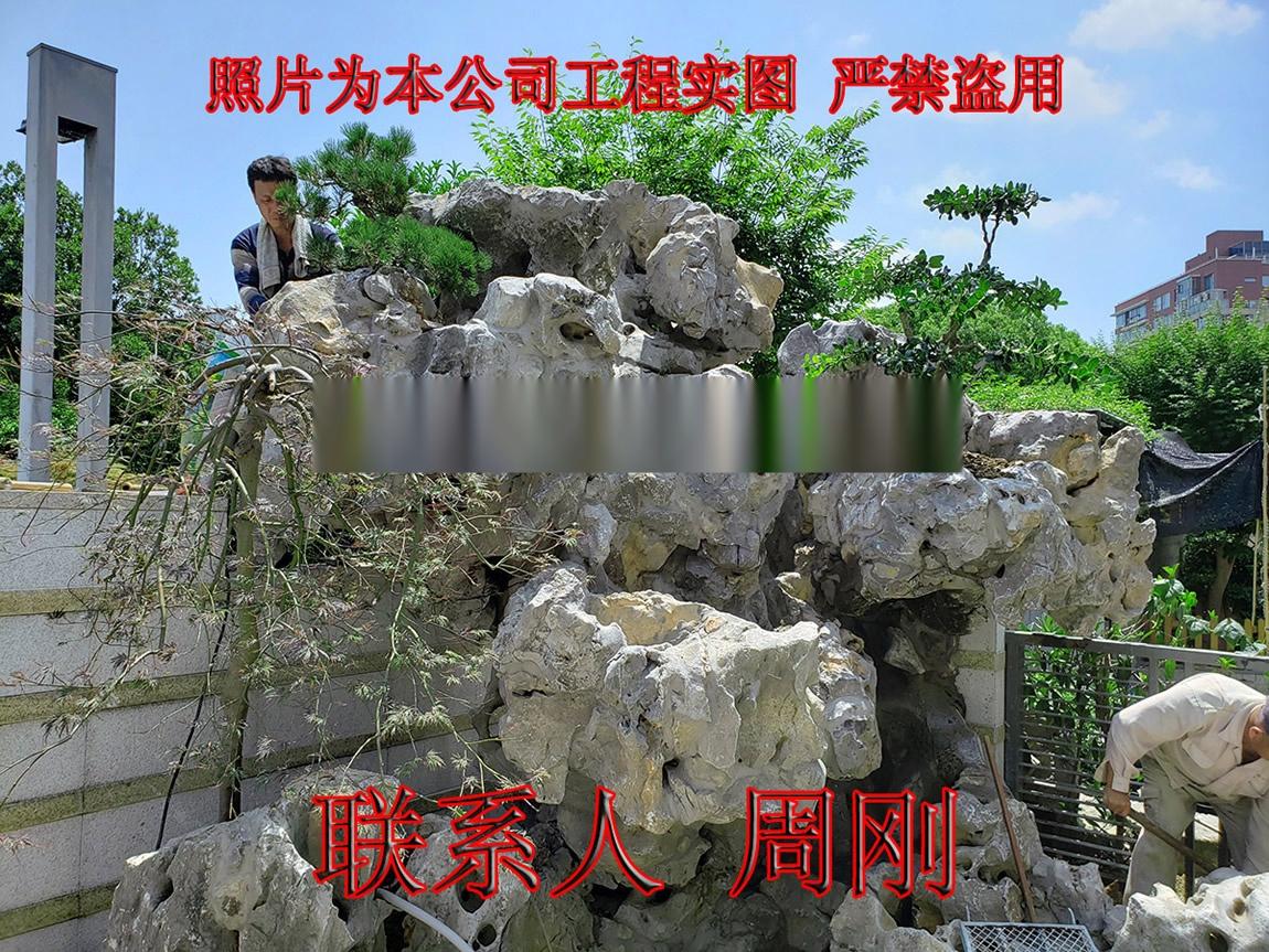 苏州羽毛枫种植基地 红羽毛枫 红枫 高杆精品鸡爪槭899746925