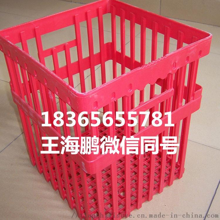配蛋托塑料种蛋筐 种蛋筐供应商 塑料蛋筐规格122526142