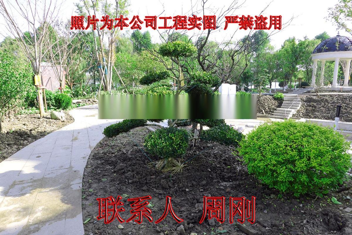 苏州庭院绿化 别墅绿化设计 私家园林绿化 苏州苗圃899246885