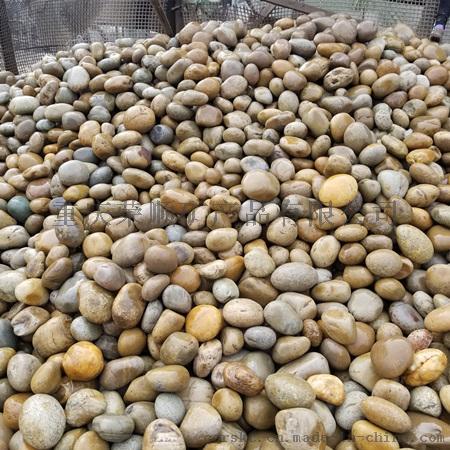 黄色鹅卵石8-12公分