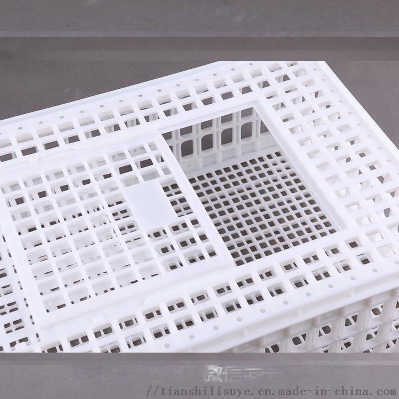 供应成鸡笼子 大鸡笼子 塑料鸡鸭大笼子898022375