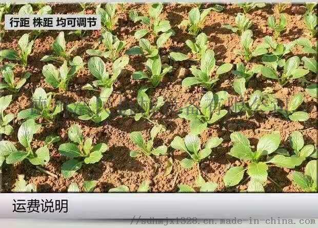 人力播種機 蔬菜播種機 白菜 菠菜精播機61128662