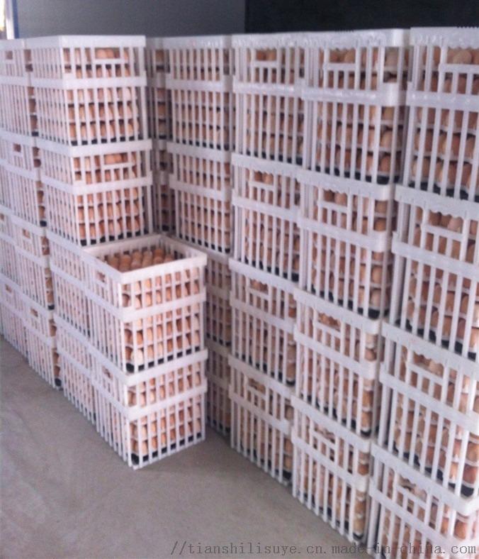 配蛋托塑料种蛋筐 种蛋筐供应商 塑料蛋筐规格122526322
