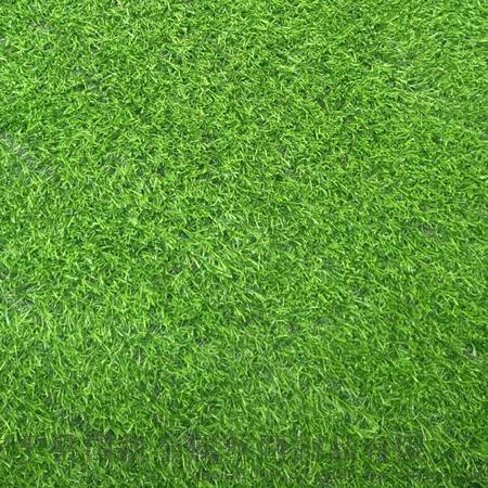 草坪 (11).jpg