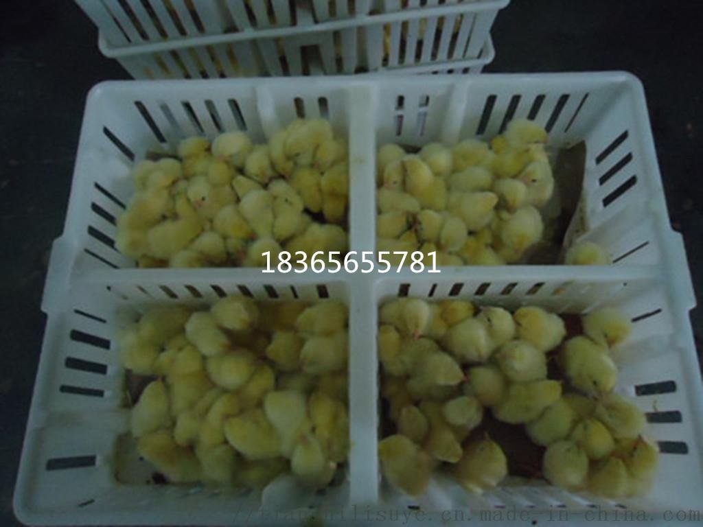 天仕利鸡苗箱 鸡苗运输箱 四格鸡苗运输箱898015685