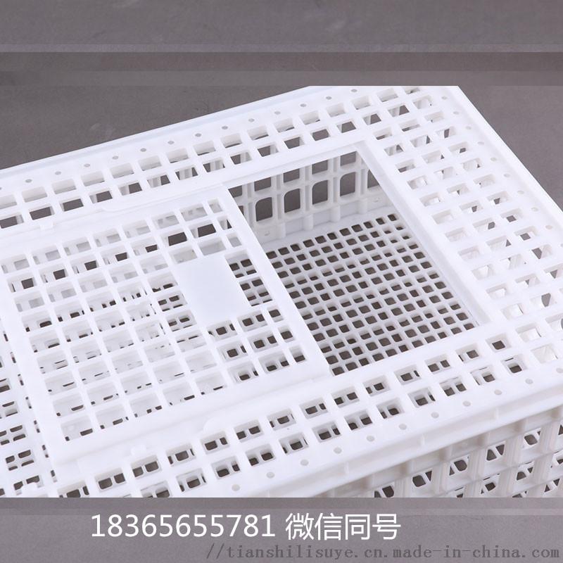 供应成鸡笼子 大鸡笼子 塑料鸡鸭大笼子134531465