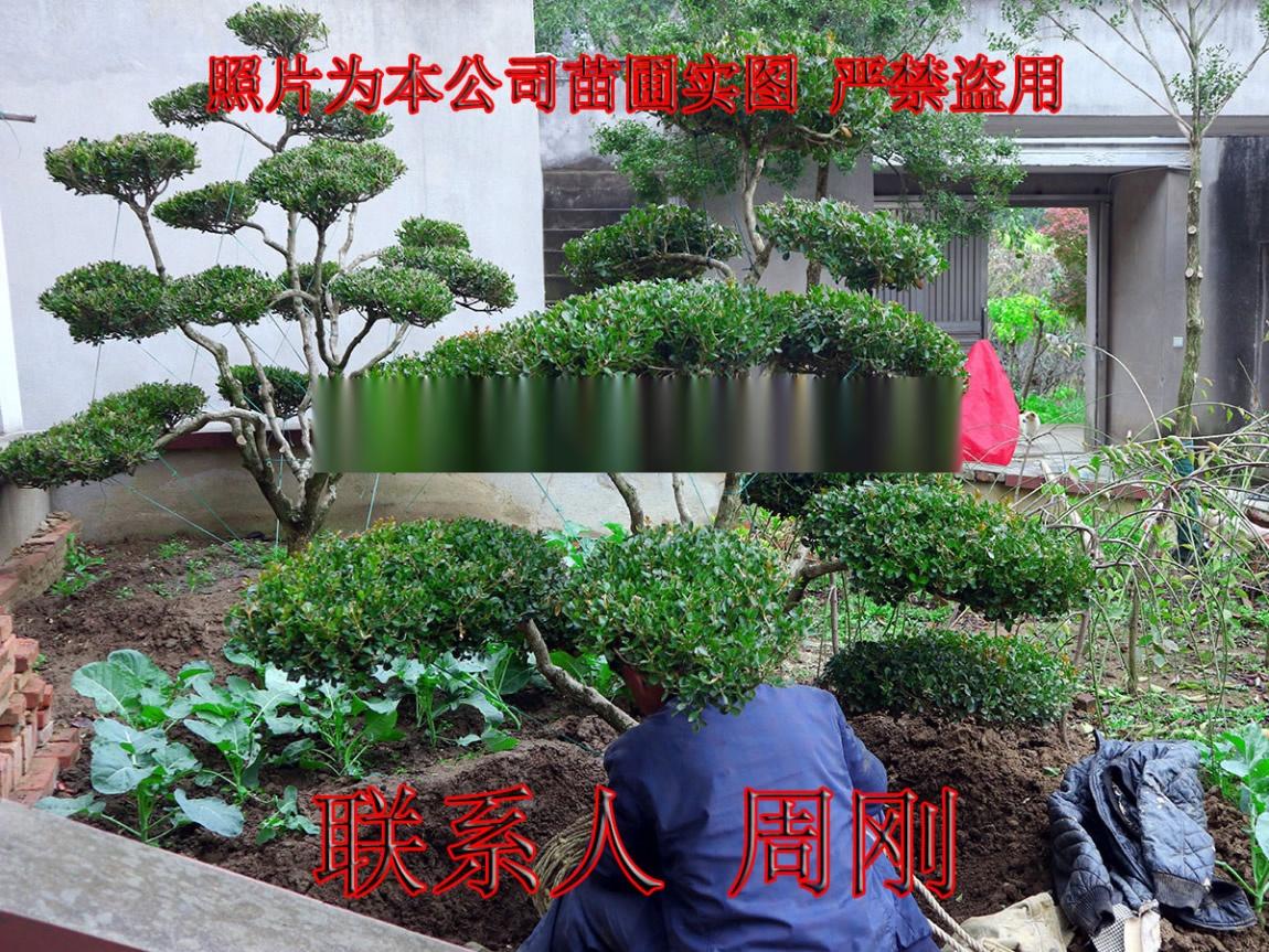 海庭院 (1) - 482kb.jpg