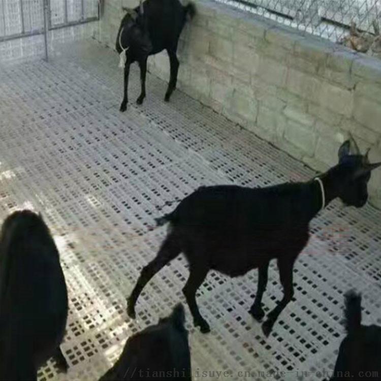 山羊漏粪板 羊床塑料漏粪板 羊漏粪地板134500285