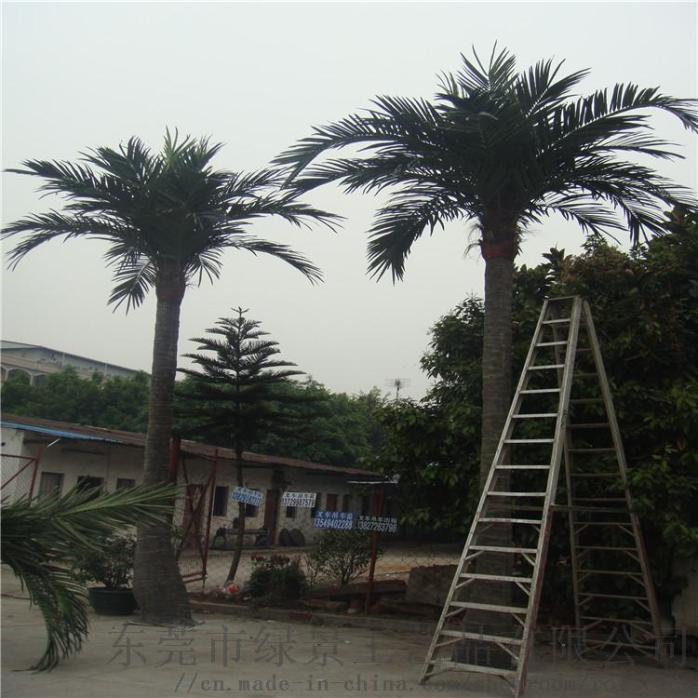 椰子树6米弯杆,直杆.jpg