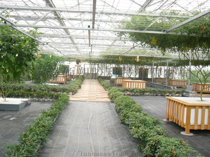 滨州阳光板温室