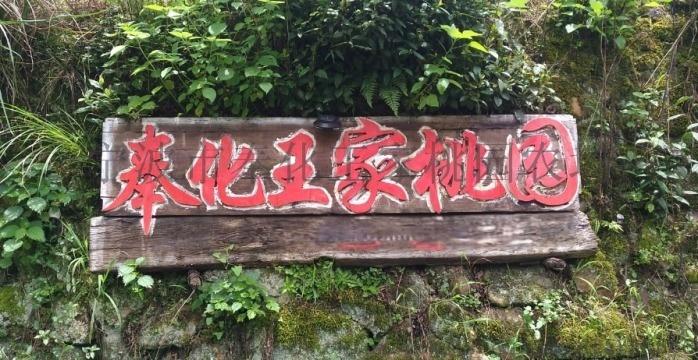 奉化王家桃园2111.jpg
