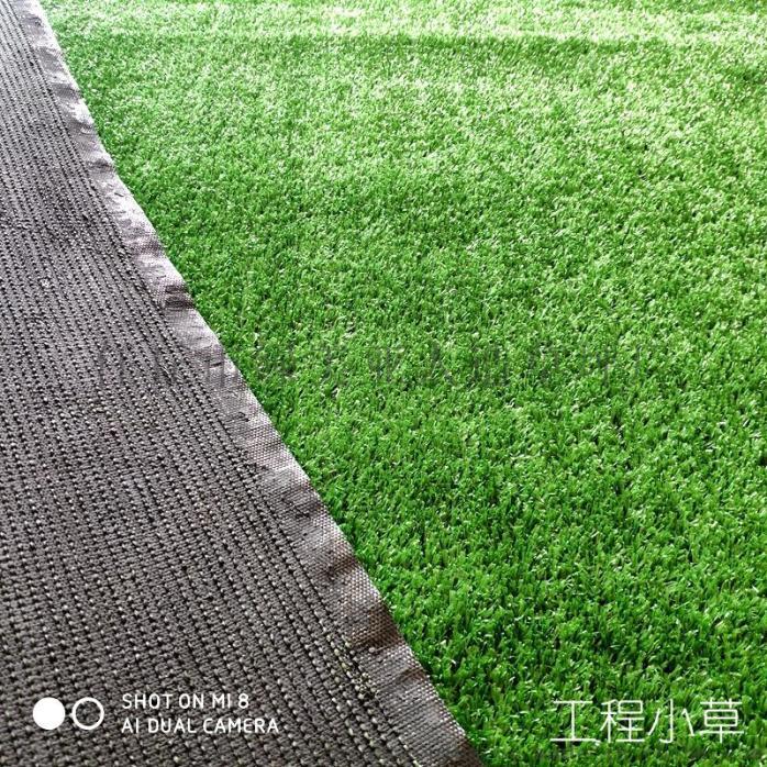 小草3.jpg