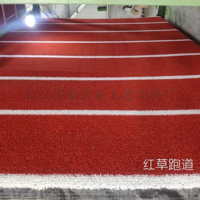 紅草4.jpg