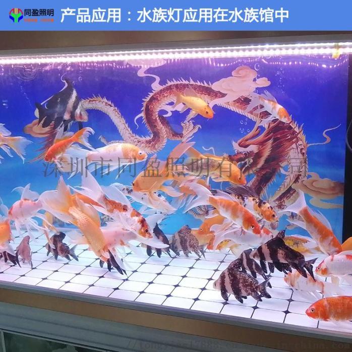 水族灯应用在水族馆中.jpg