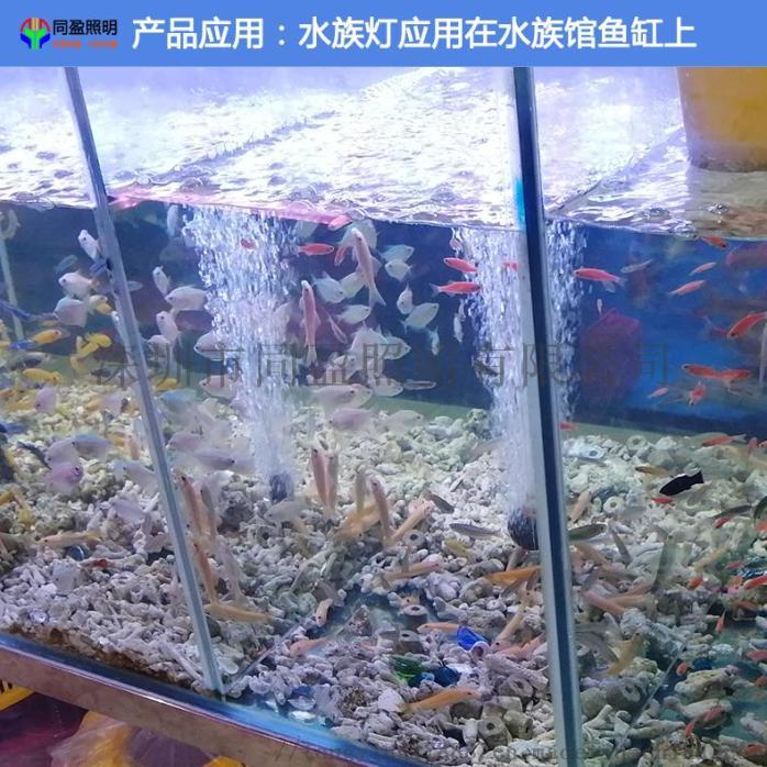 水族燈應用在水族館魚缸上.jpg