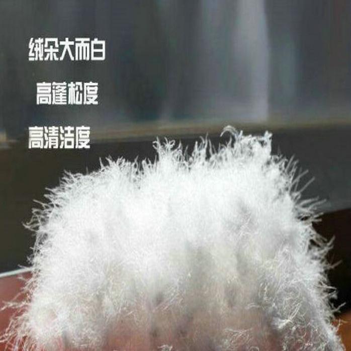 厂家直销水洗90白鸭绒958997305