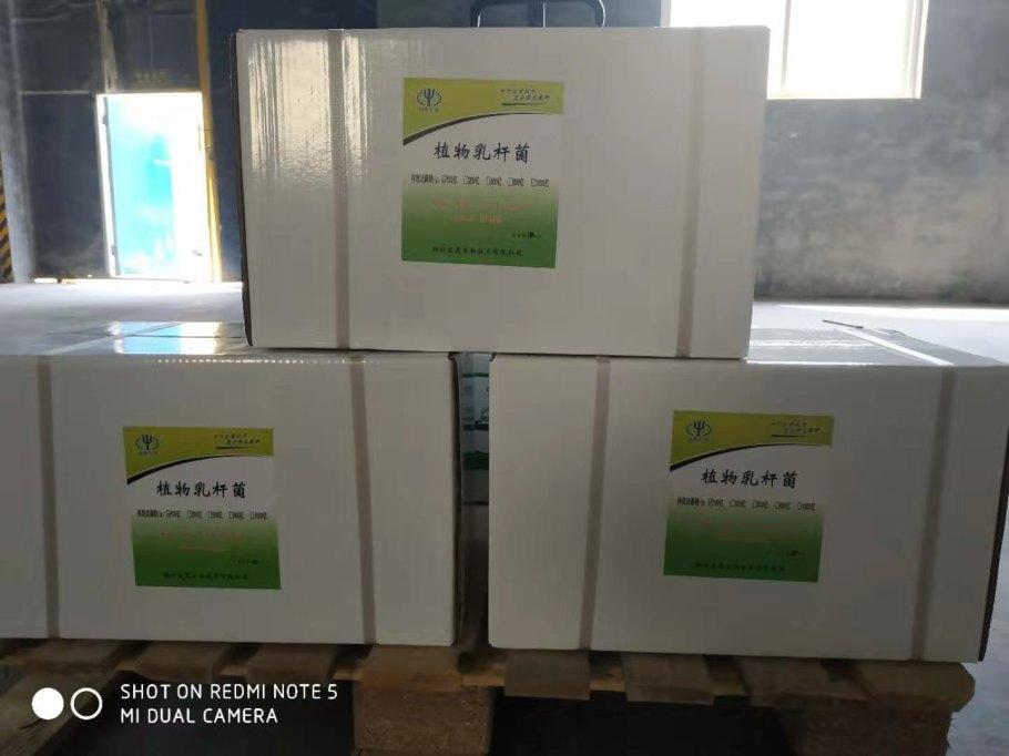 植物乳桿菌飼料添加水產養殖用 植物乳桿菌原料101494202