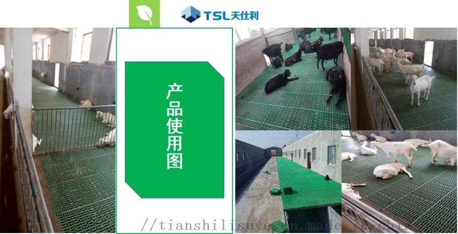 羊用塑料羊床养羊漏粪板塑料羊地板厂家137927512