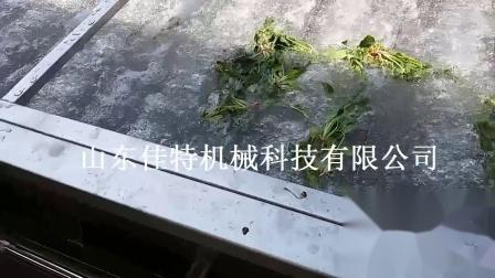 蔬菜清洗机
