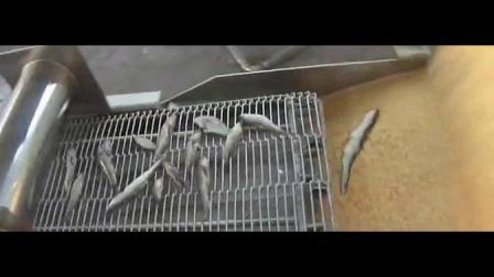 工藝指導全自動小酥肉上漿油炸整套生產線