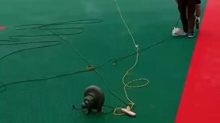 鄂州市彈性墊懸浮地板湖北懸浮地板廠家