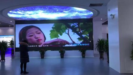 展厅LED天幕显示屏