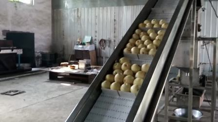 刮板提升机式水果鼠笼破碎试机视频展示