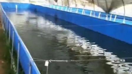 帆布水箱刀刮布水池 水蛭养殖专用池 蚂蟥