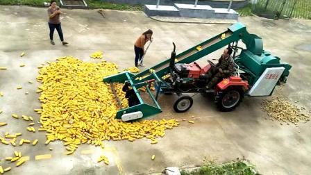 大型玉米脱粒机视频